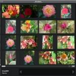 Photology: trovare immagini in archivi immensi